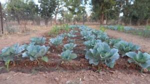 jardin péda 8 (800x450)